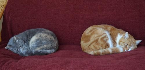 lapaumanelle-dolomieu-chats